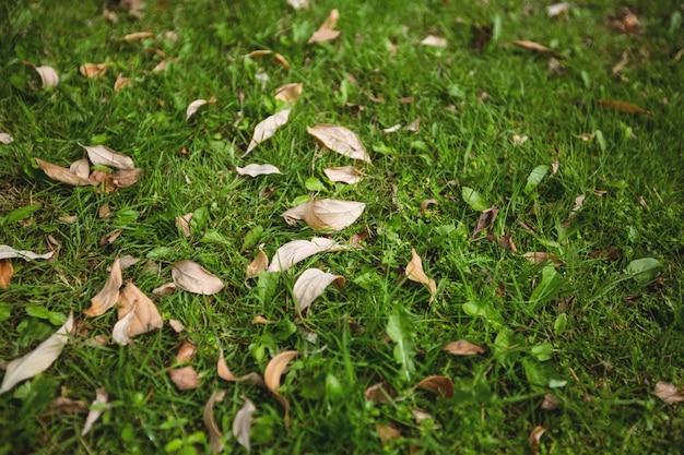 Suche liście spadły na zielonej trawie