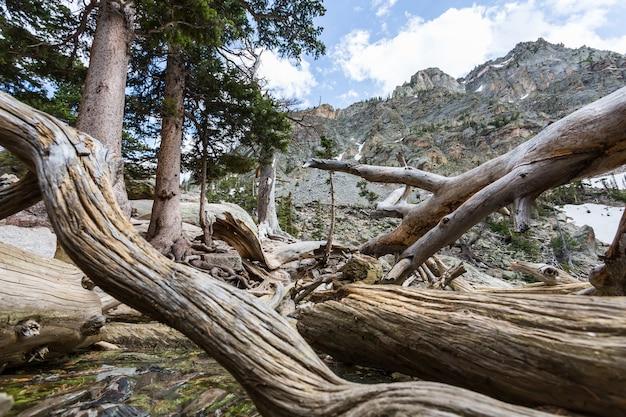 Suche martwe drzewa w lesie