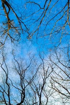 Suche, nagie gałęzie drzewa na tle błękitnego nieba przy słonecznej pogodzie