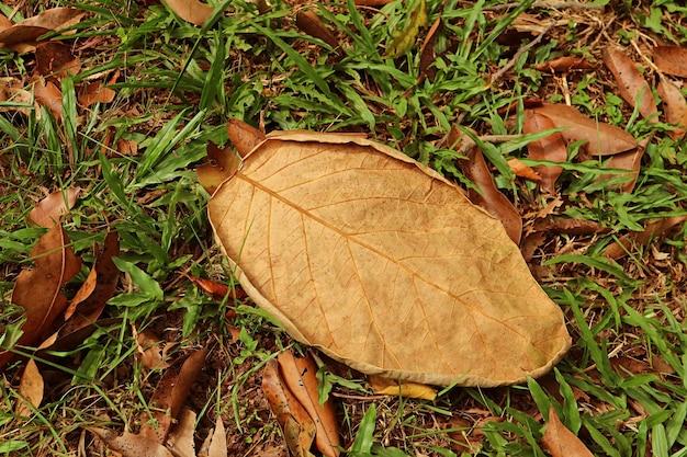 Suche opadłe jesienne liście na trawie