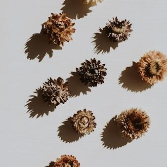 Suche pąki kwiatowe na zakurzonej szarości