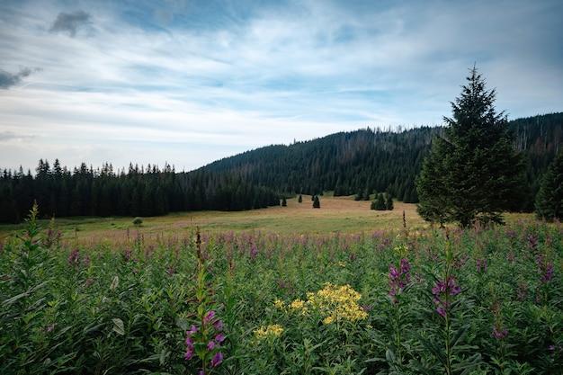 Suche pnie drzew na tle górskiego krajobrazu
