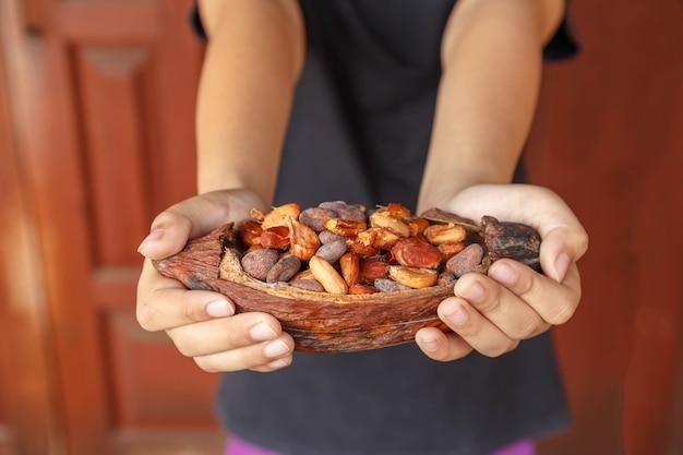 Suche ziarna kakaowe pod ręką