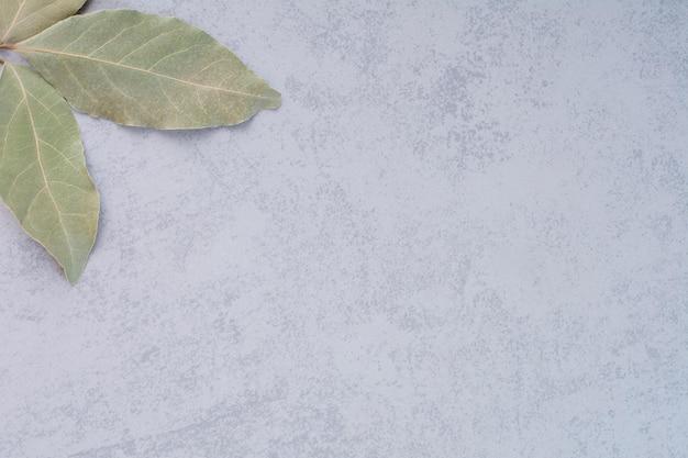 Suche zielone liście laurowe na betonowym tle.