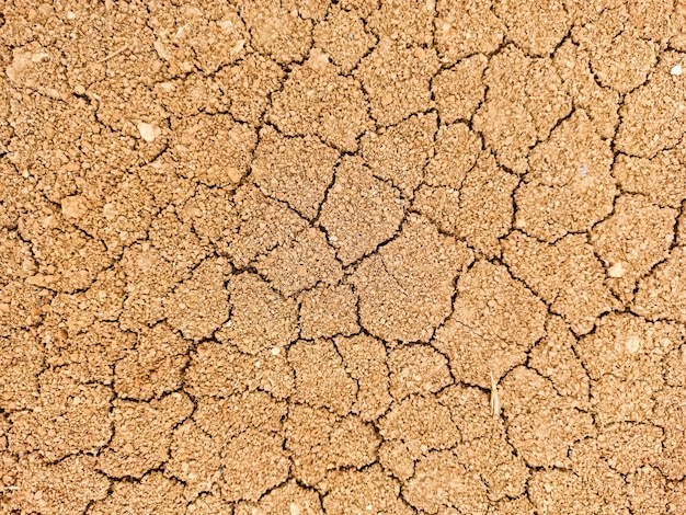 Suche ziewanie w pęknięciach, globalne ocieplenie, ekologia.