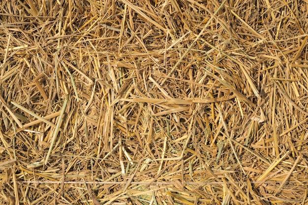 Suchej słomy tekstura tło. używany jako pokarm dla krów