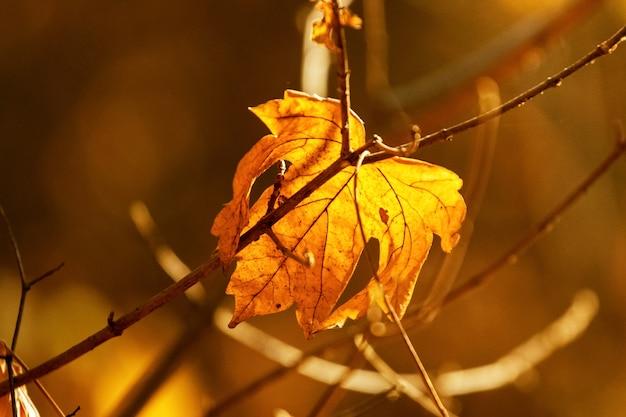 Suchy jesienny liść na niewyraźnym tle w ciepłych kolorach