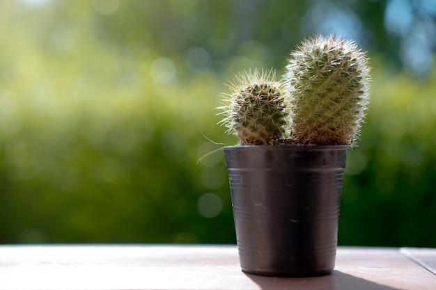 Suchy kaktus z naturą i wspaniałym słońcem falre