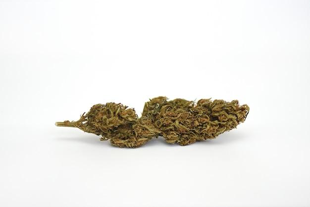 Suchy kwiat marihuany medycznej na białym dnie odmiany mooje