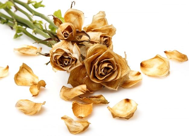 Suchy kwiat róży
