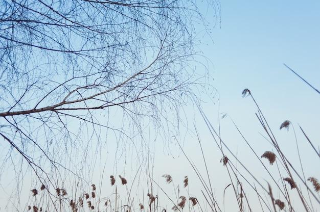 Suchy las z roślinnością wczesną wiosną