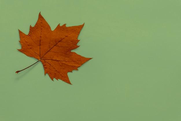 Suchy liść babki na zielonym tle jesień koncepcja