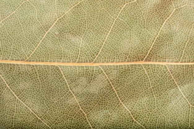 Suchy liść laurowy tekstura tło makro aromatyczna indyjska przyprawa