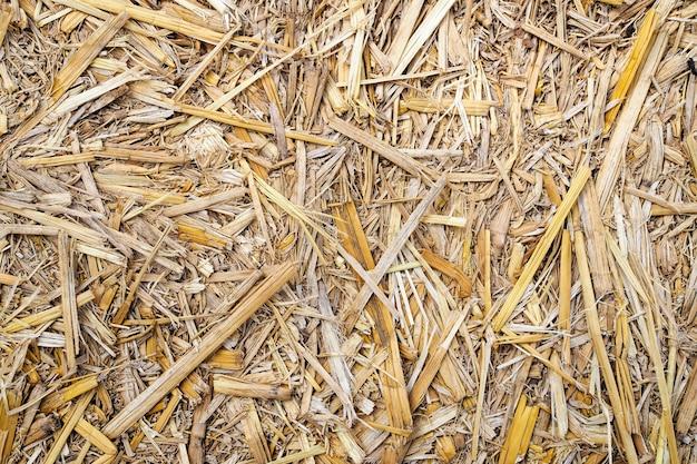 Suchy słomiany tekstury natury tło. widok z góry