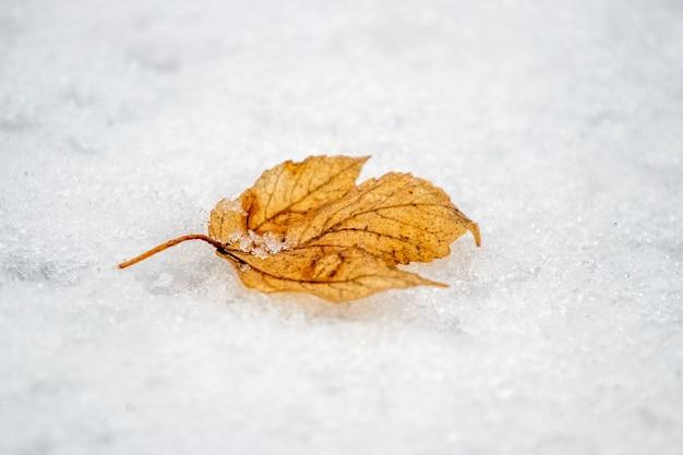 Suchy żółty liść na śniegu, zimowe tło