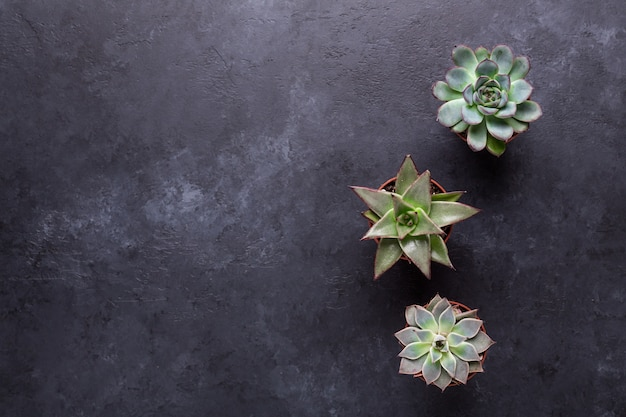 Sukulenty na czarnym stole tabeli kamienia