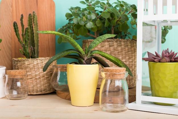 Sukulenty, rośliny domowe w doniczkach