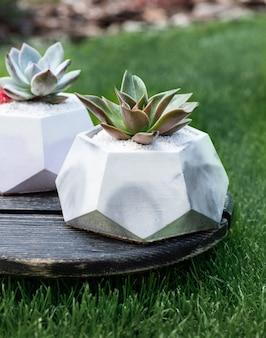 Sukulenty w ceramicznych szarych doniczkach pośrodku na drewnianej małej tabliczce wśród traw