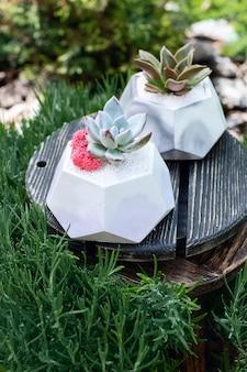 Sukulenty w ceramicznych szarych i białych doniczkach pośrodku na drewnianej małej tabliczce wśród traw