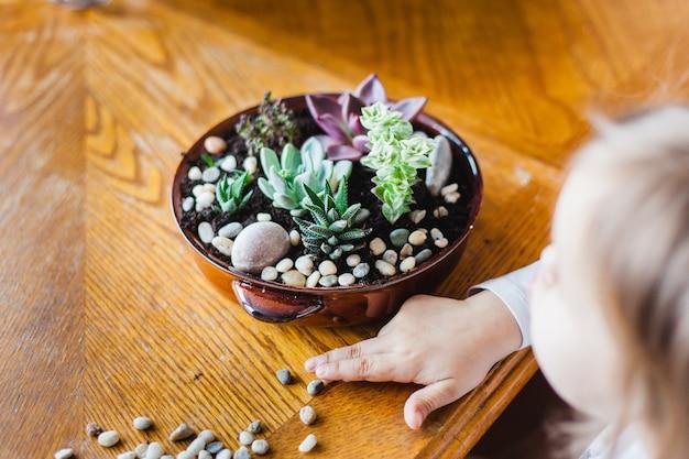 Sukulenty w doniczkach, kwiaty w domu