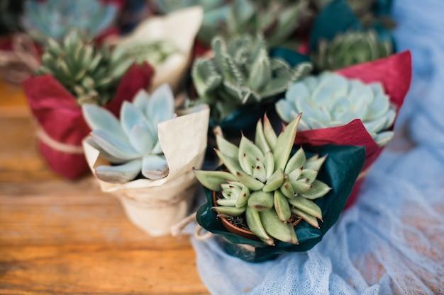 Sukulenty w doniczkach wiadro z ziemią i konewka sadzenie i pielęgnacja roślin doniczkowych i kwiatów