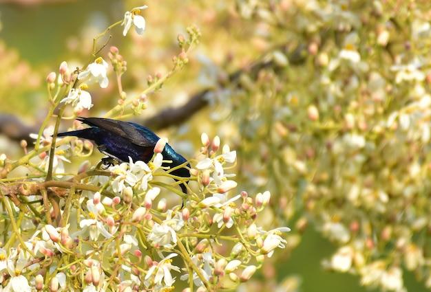 Sunbird na gałęzi drzewa w naturze