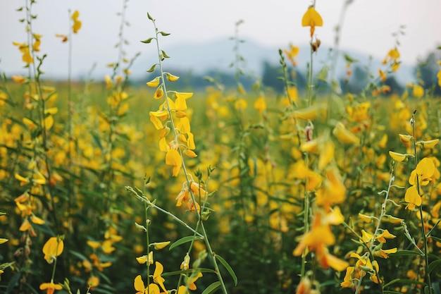 Sunhemp kwiat z kwiatami i kwiatami ogrodowymi