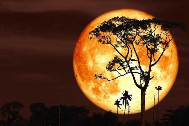 Super buck księżyc na noc czerwone niebo z powrotem sylwetka drzewa