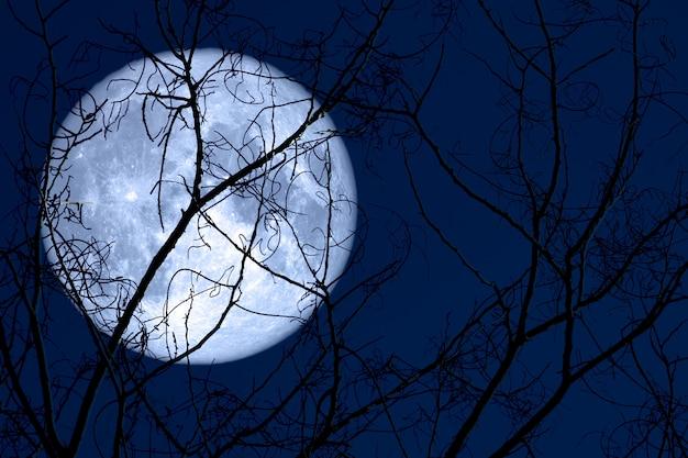 Super jajeczna księżyc z powrotem na sylwetki roślinie i drzewach na nocnym niebie