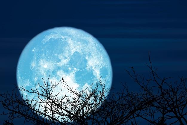 Super jesiotr niebieski księżyc i sylwetka góry kokosowego drzewa na nocnym niebie, elementy tego zdjęcia dostarczone przez nasa