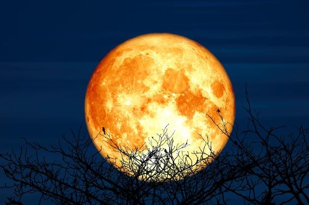 Super księżyc jesiotra i sylwetka góry drzewa kokosowego na nocnym niebie, elementy tego zdjęcia dostarczone przez nasa