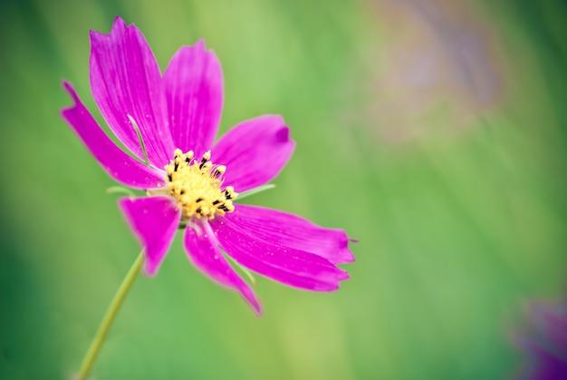 Super makro kwiat, selektywna ostrość, płytka głębia pola