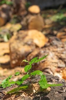 Super zbliżenie rosnącej rośliny z kilkoma wyciętymi pniami drzewa w tle