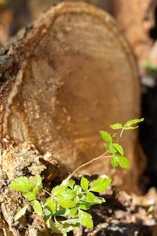 Super zbliżenie rosnącej rośliny z pniem drzewa wyciętego w tle