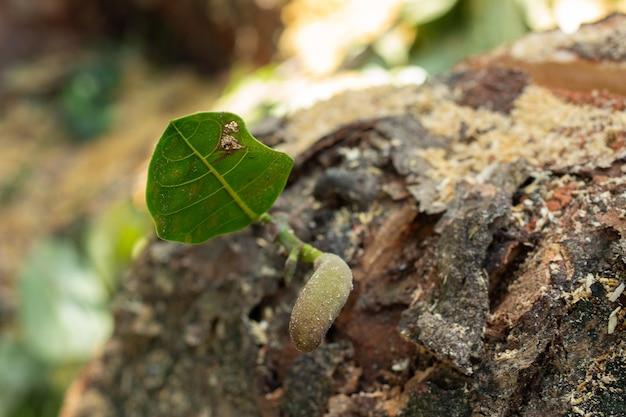 Super zbliżenie rosnącej rośliny z roślinnym tłem