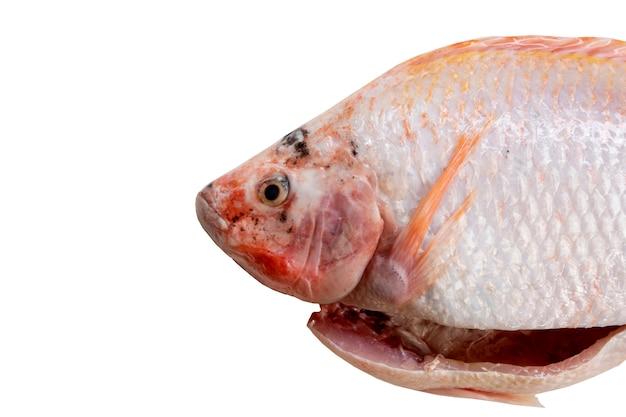 Surowa czerwona rybka tilapia przygotowana na gotowanie