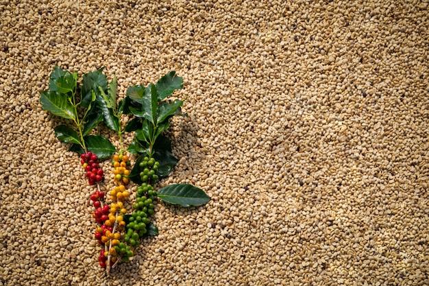 Surowa kawa z zielonymi liśćmi i wysuszonymi kawowymi fasolami