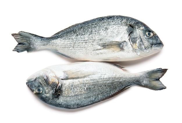 Surowa ryba dorado na białym tle