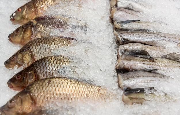 Surowa ryba morska pollock i schłodzony karp wśród lodu w lodówce w supermarkecie.