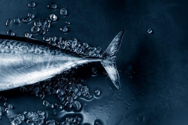 Surowa świeża tuńczyk ryba