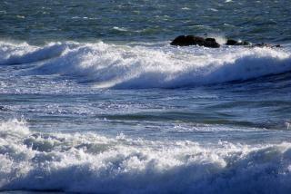 Surowca surf