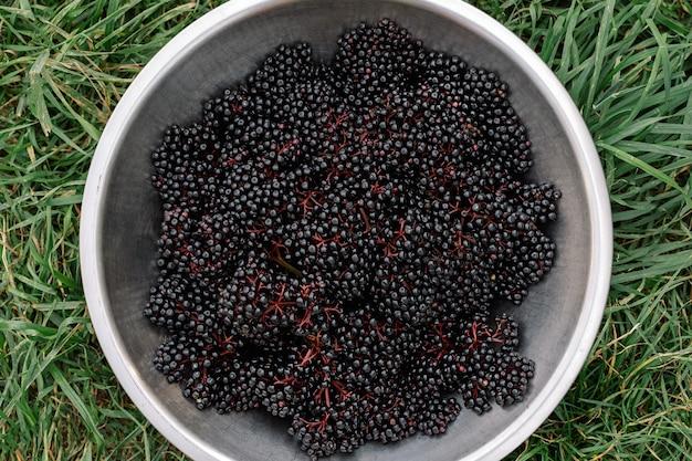 Surowe dojrzałe owoce czarnego bzu w misce stojące na zielonej trawie widok z góry na dół grona owoców czarnego bzu...