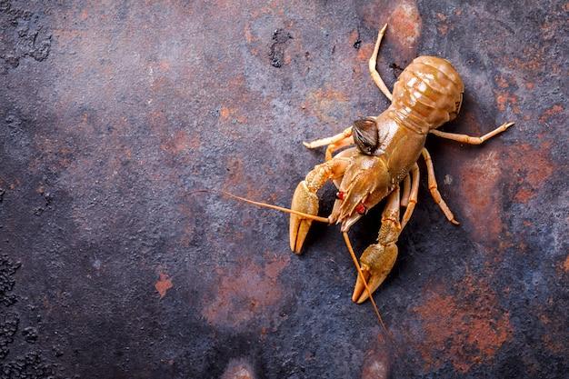 Surowe raki, homar dla dzieci. tło owoce morza.