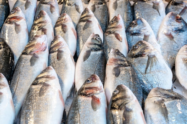 Surowe świeże ryby na rynku owoców morza. jedzenie.