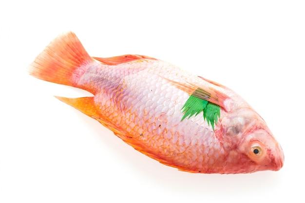 Surowe świeże ryby