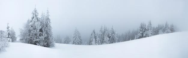 Surowy zimowy krajobraz piękne ośnieżone jodły stoją na mglistym górzystym terenie w mroźny zimowy dzień.