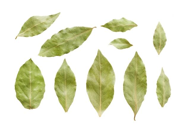 Susi zatoka liście odizolowywający na bielu