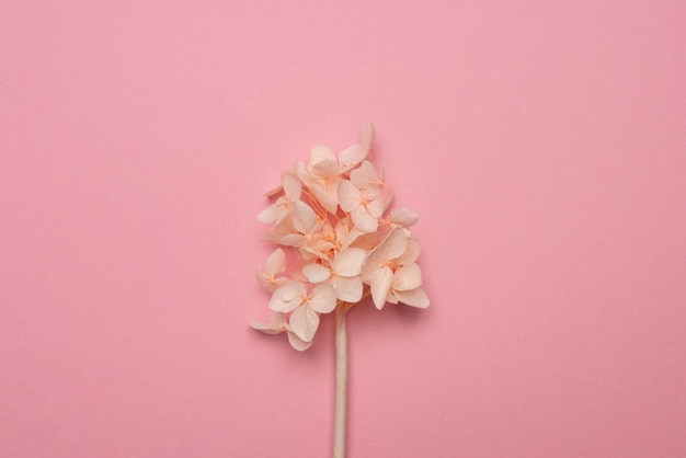 Susz delikatne kwiaty na różowej powierzchni papieru