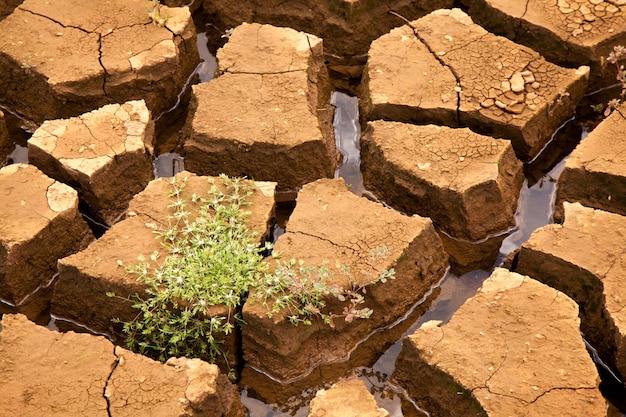 Susza gleba z roślinnością w brazylijskiej tamie