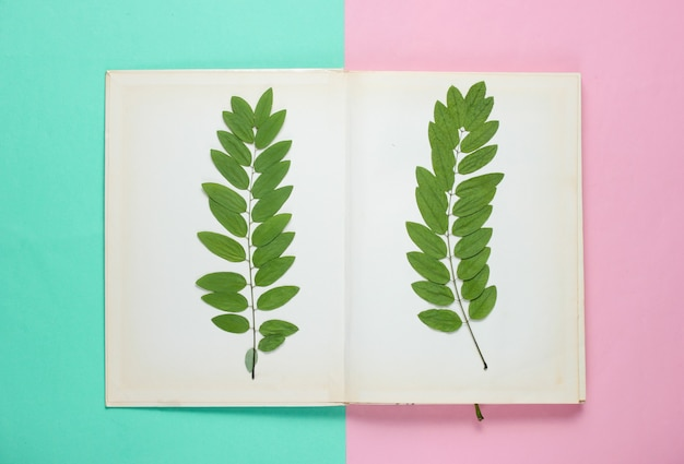 Suszona gałązka z zielonymi liśćmi w starej książce. zielnik